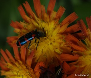 Beetle on paint brush
